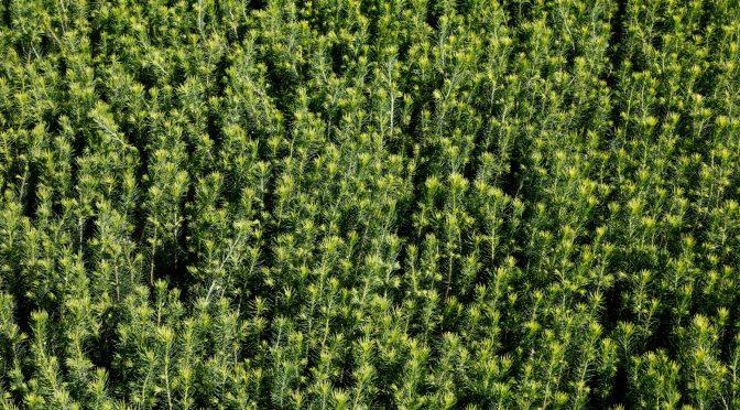 Fåtal platser kvar! Lär dig om svenskt skogsbruk – på riktigt