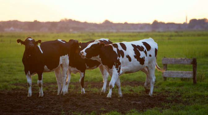 Vem är årets lantbruksjournalist 2021?